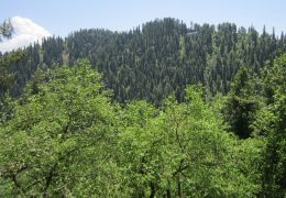 Green Pakistan